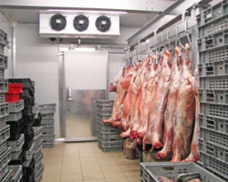 cold-room-fresh-meat